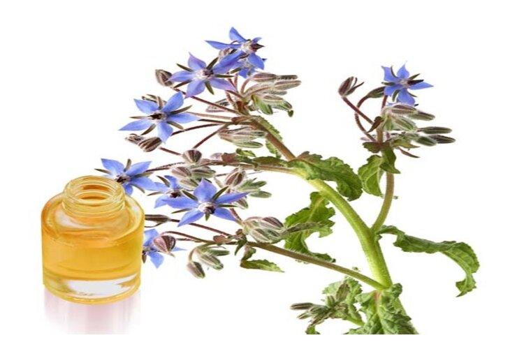 huile de bourrache pour une peau parfaite